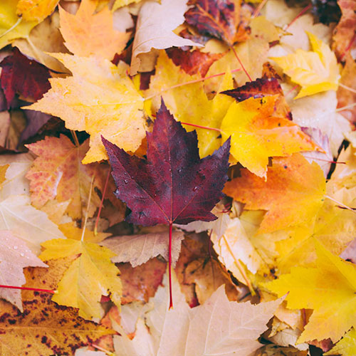 blog-autunno